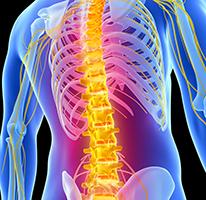 back-spine